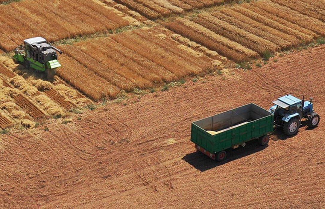 La semana empieza con otra fuerte subida de los cereales en la Lonja del Ebro en un mercado que parece no alcanzar techo en los precios