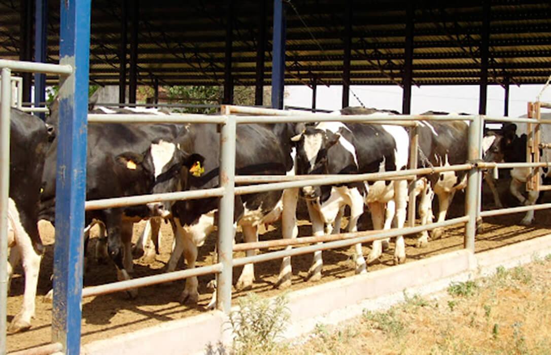 Instan a presentar alegaciones ante una ordenación de las explotaciones de bovino que no diferencia la ganadería extensiva de la intensiva