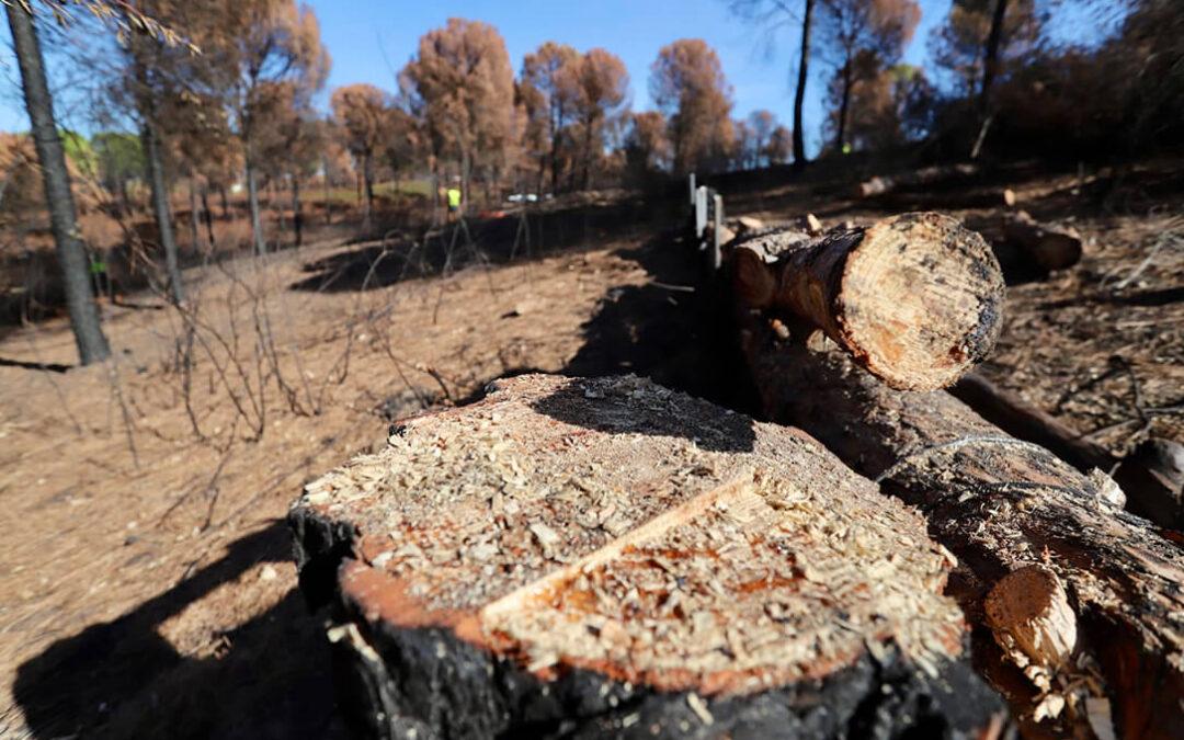 Concluyen los trabajos de restauración del monte Dehesa de Jarrama afectado por el incendio forestal de Granada de Río-Tinto