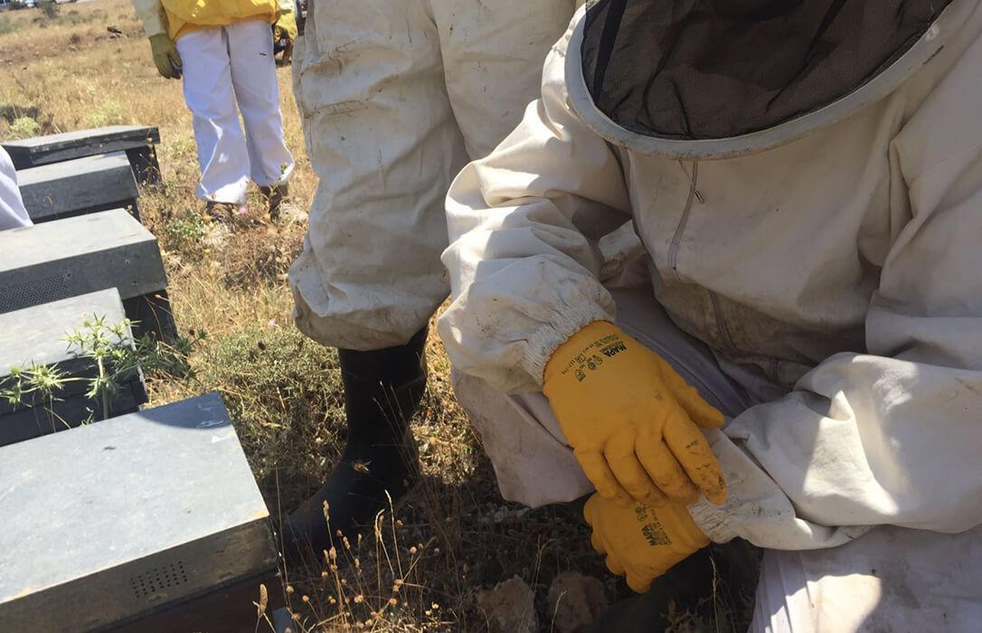 El sector apícola de la Comunitat Valenciana denuncia la desidia y falta de soluciones a los problemas de la apicultura