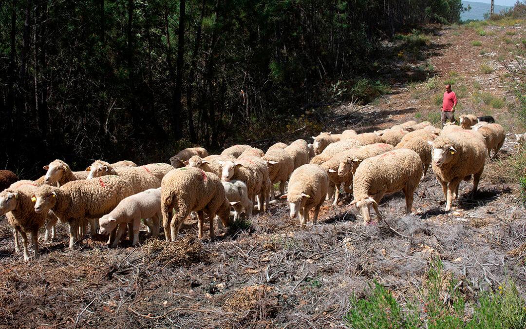 Navarra se suma a otras CCAA para que se reconozca a la Trashumancia como Patrimonio Cultural Inmaterial