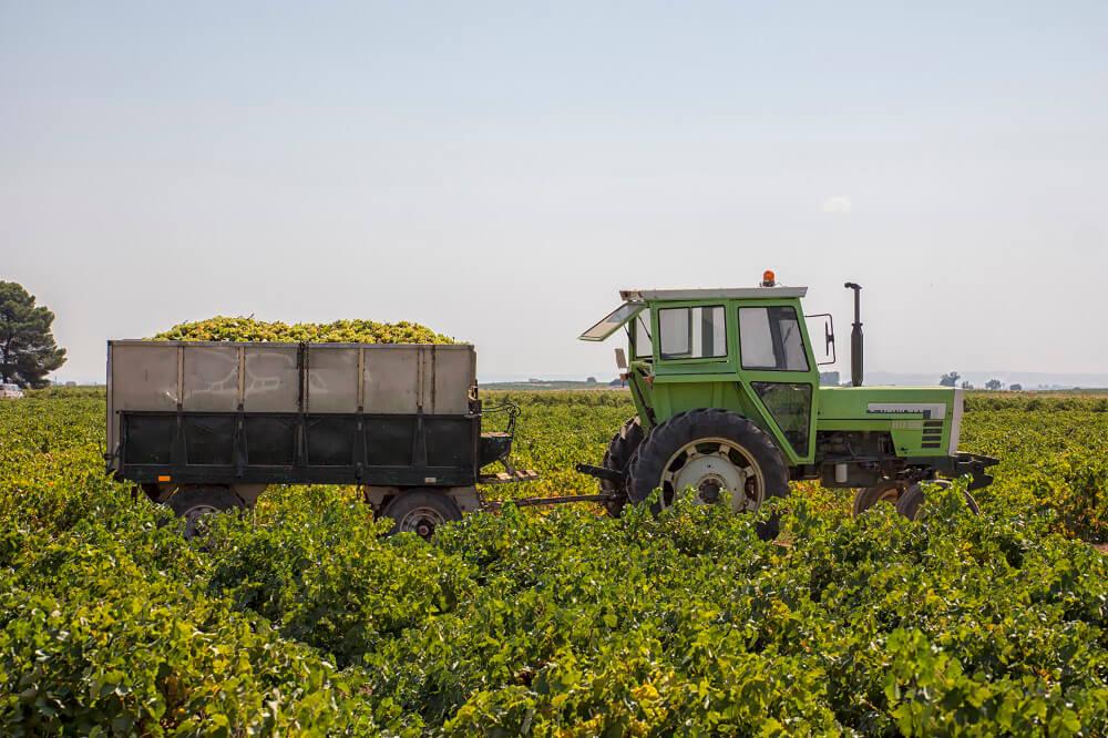 Las protestas dan su fruto: Los viticultores cobrarán la uva airen entre un 40 y un 50% más que la cotización de inicio de la vendimia