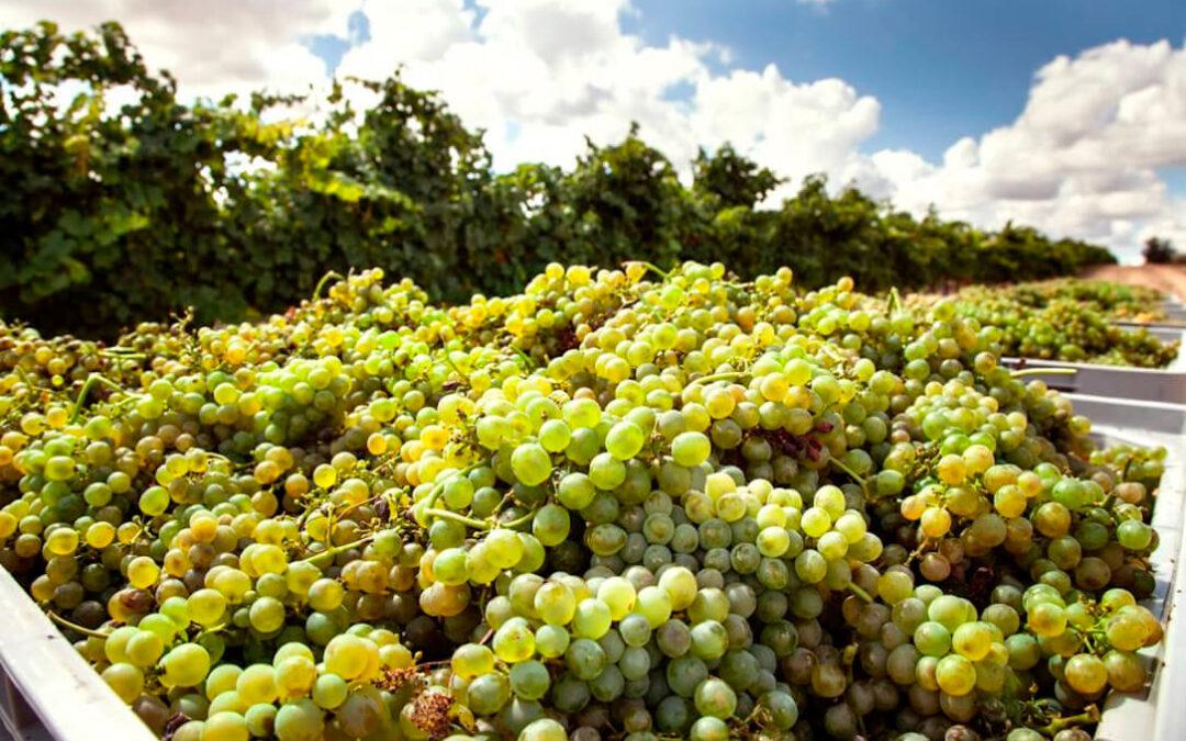 Vendimia 2021 Bodega Cuatro Rayas: Campaña corta y de gran calidad en su viñedo ecológico y de cultivo sostenible